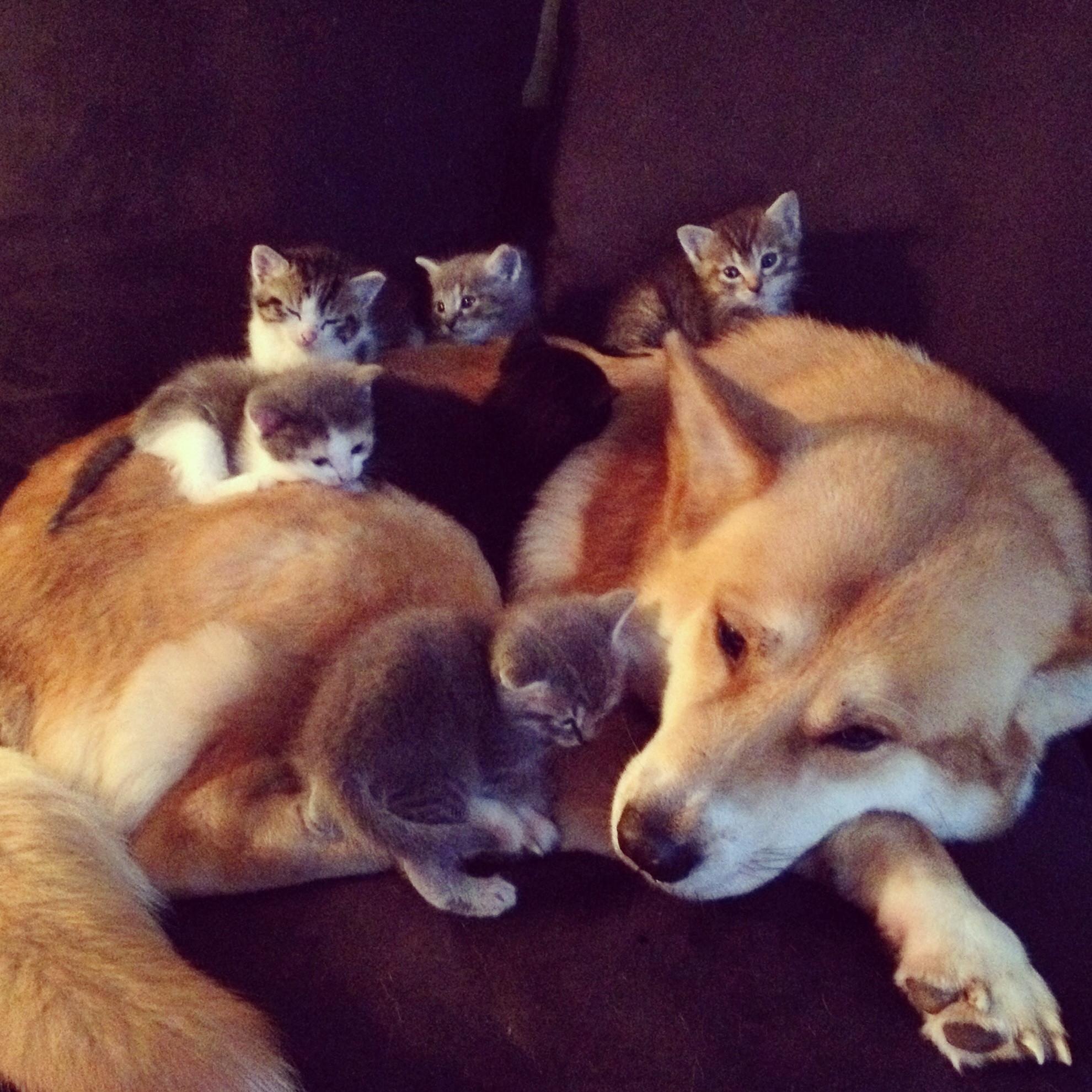 Cute Dog Kittens Cats