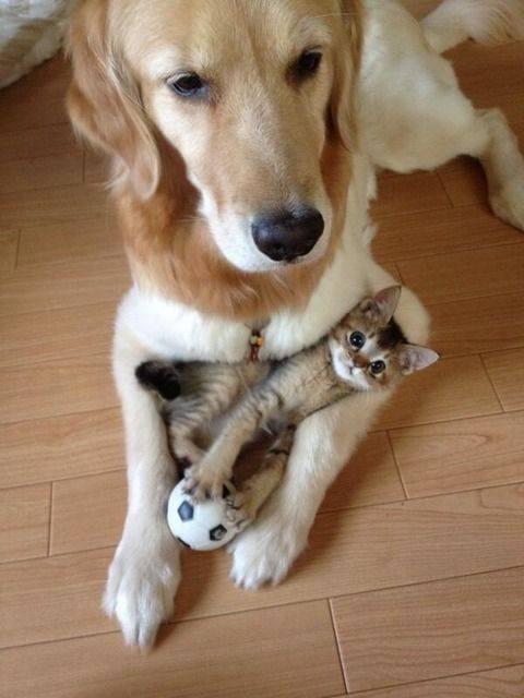 Puppy Dog Cat Kitten Cuddle Cuddling