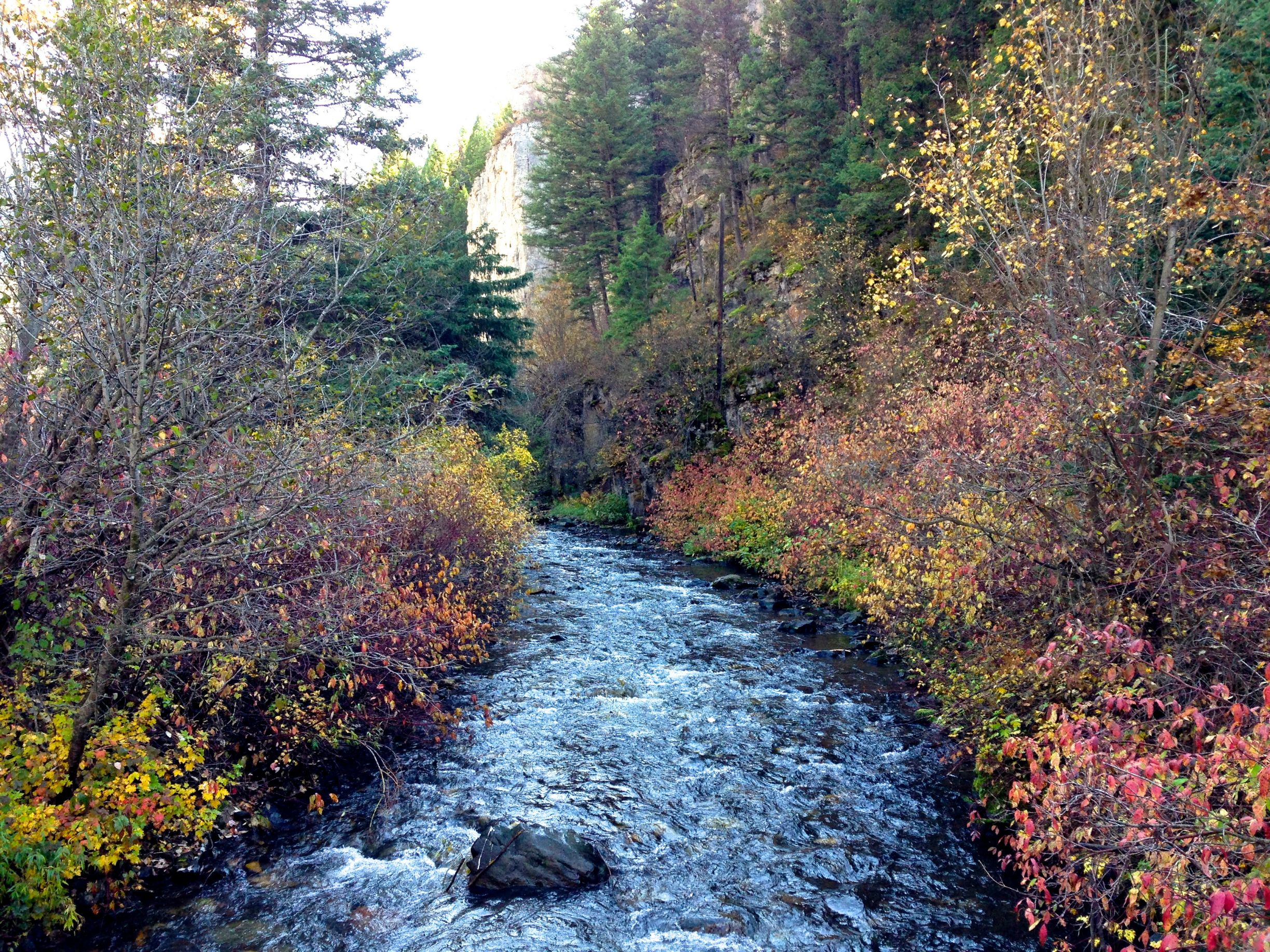 babbling autumn brook
