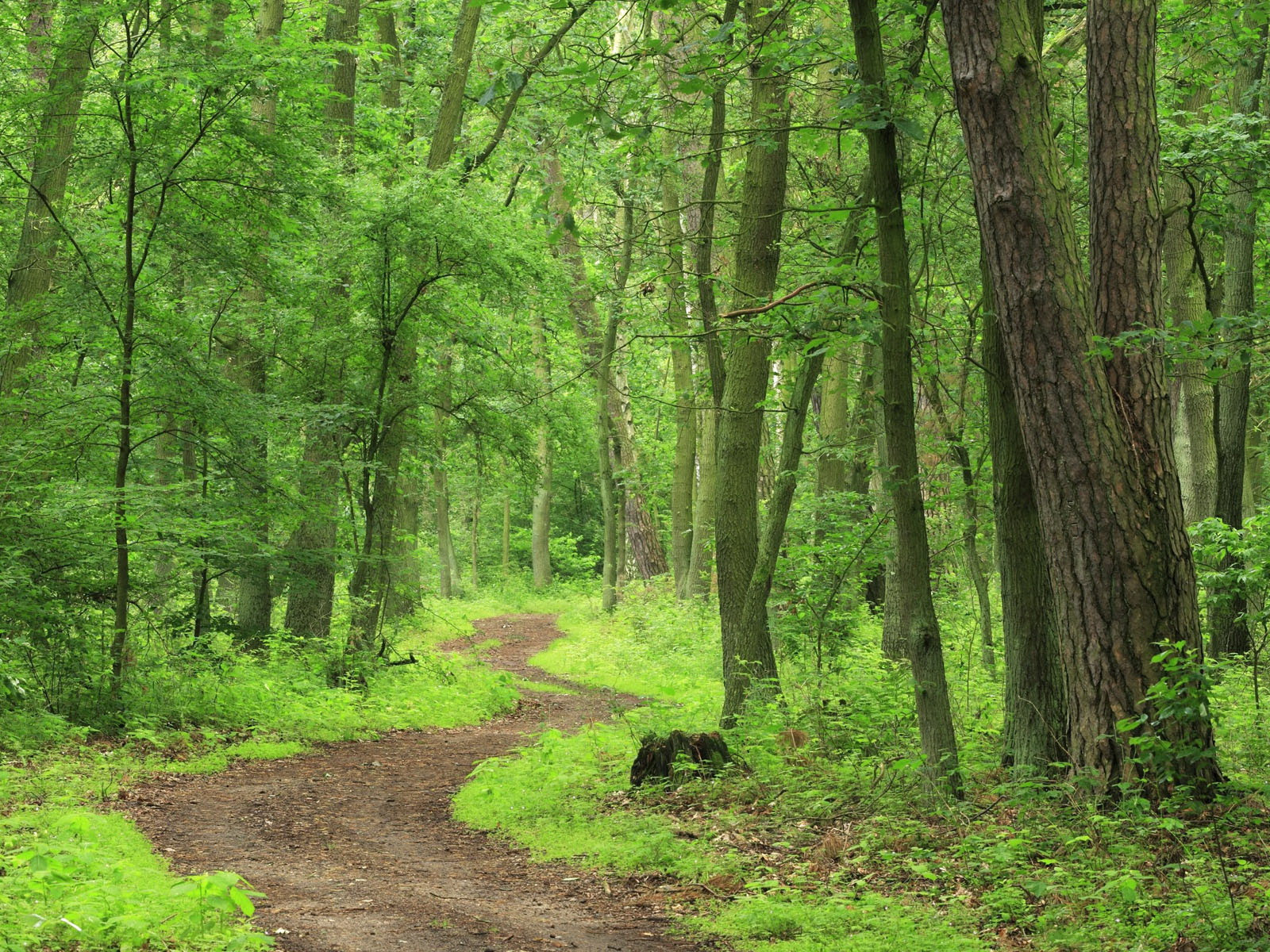 lush green forest trail