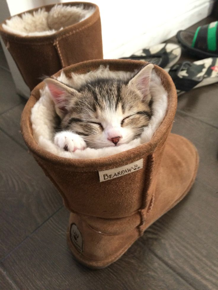 kitten in boot