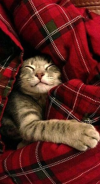 kitty in plaid